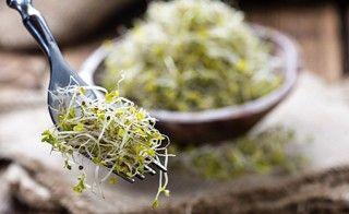 broccoli und brokkoli sprossen das ideale team keimlinge sprossen saatzucht. Black Bedroom Furniture Sets. Home Design Ideas