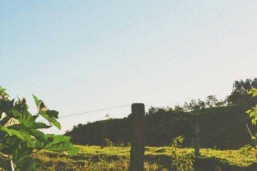 Sozinha entre esse mar verde. on Flickr. Sozinha entre esse mar verde.