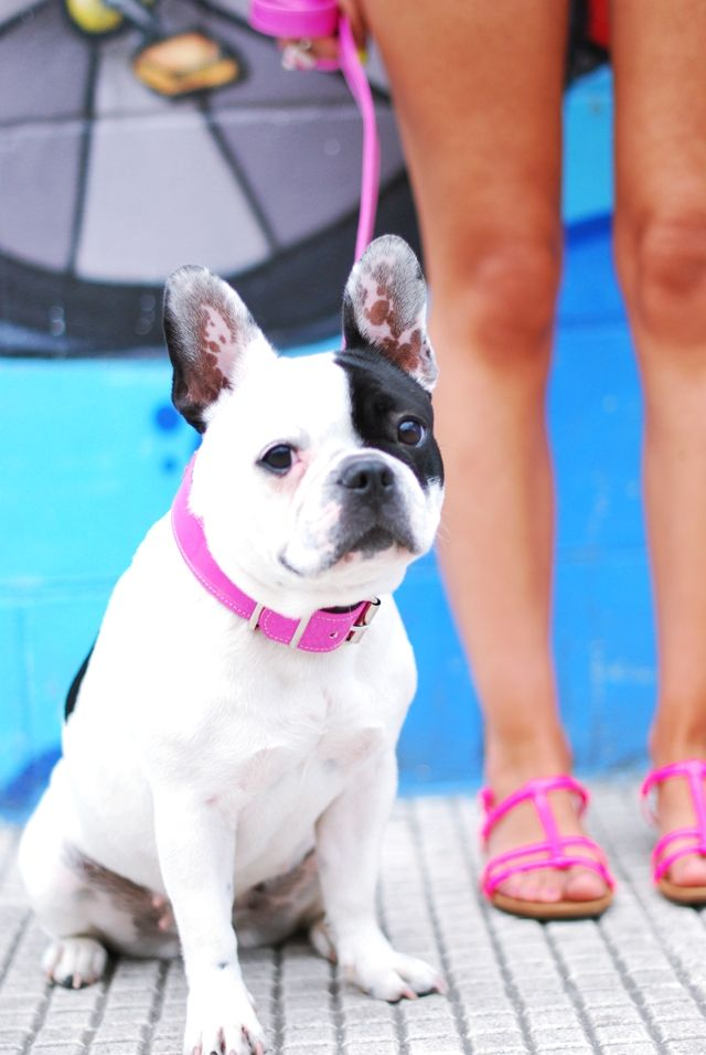 Best Dog Food For French Bulldog Philippines Best Dog Food Dogs