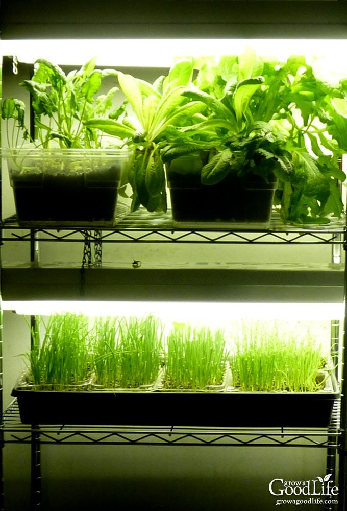 Build A Grow Light System For Starting Seeds Indoors 400 x 300