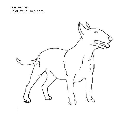 Pin On Wildlife Drawings