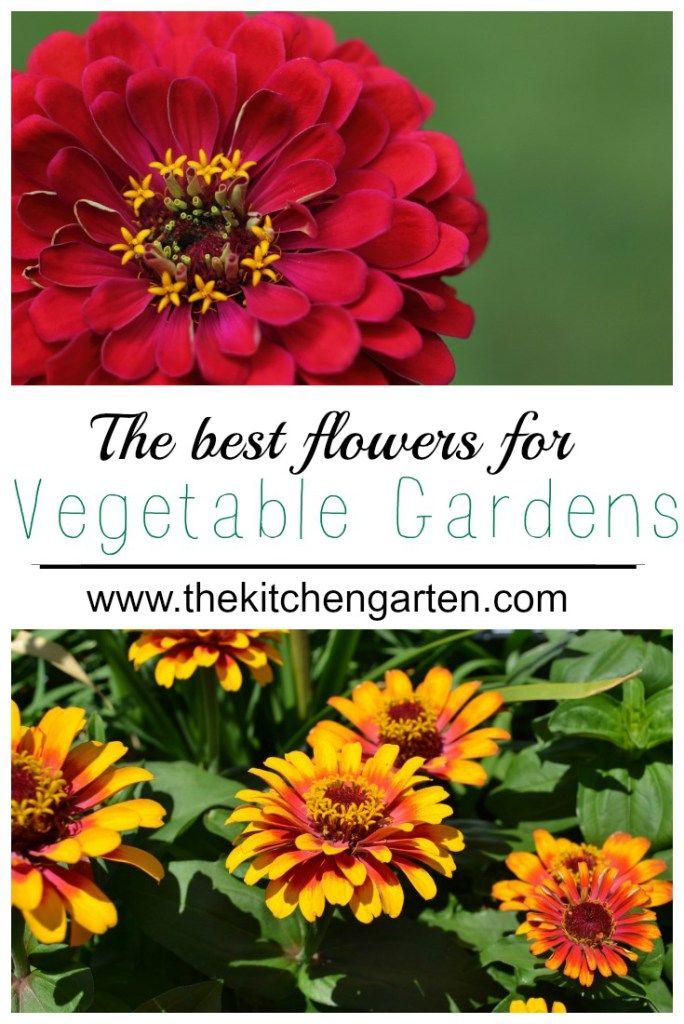 The Best Flowers For Vegetable Gardens Vegetable Garden Planner