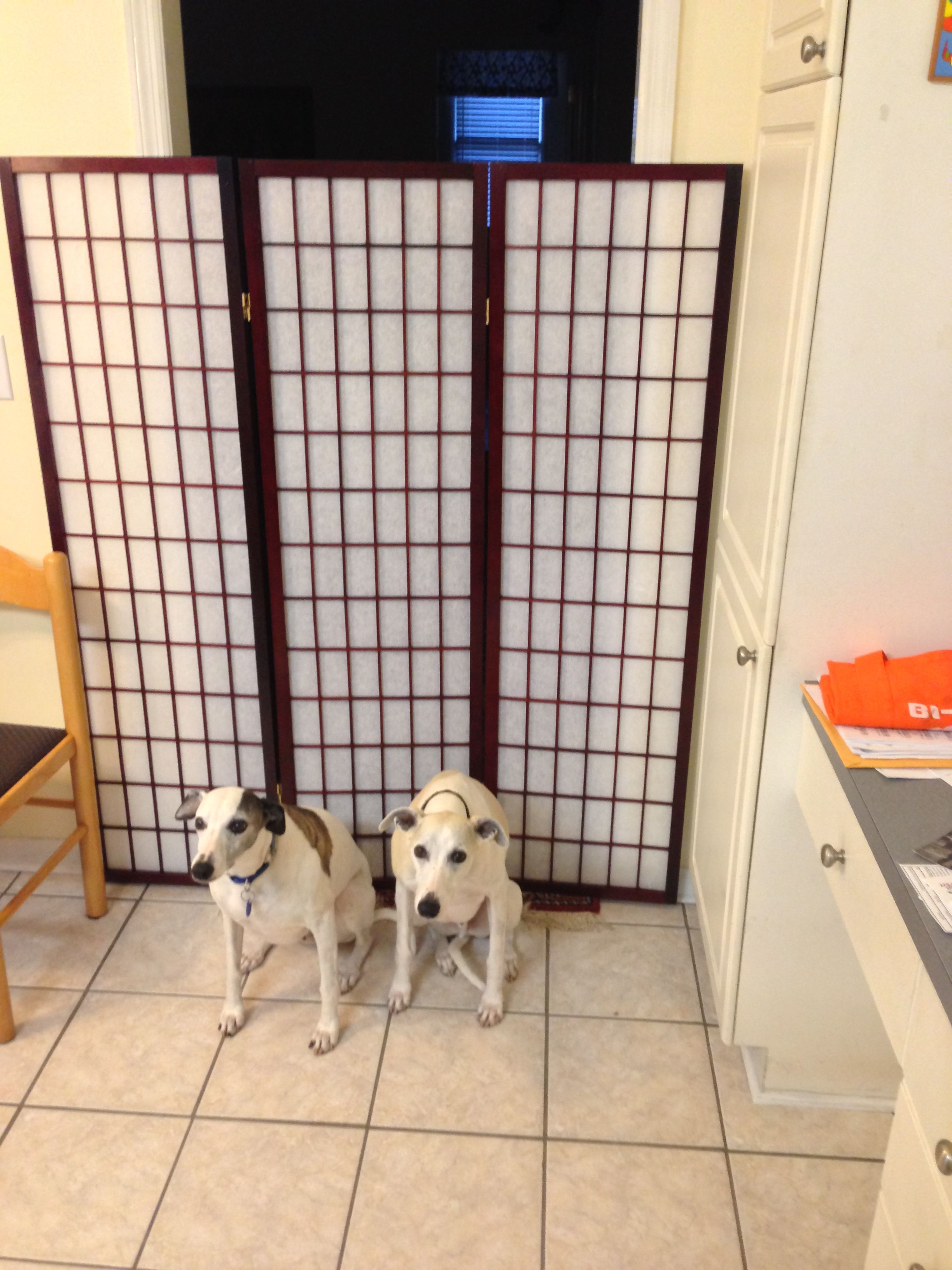 Pin By Urban Accents Ny On Room Divider Pictures From Our Customers Dog Gate Diy Dog Gate Cat Gate