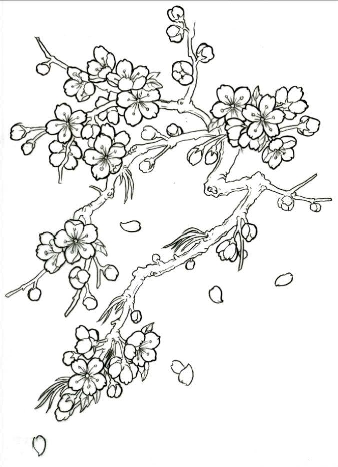 Japanese Cherry Blossom Tree Drawing Flower Drawing Cherry Blossom Drawing Blossoms Art