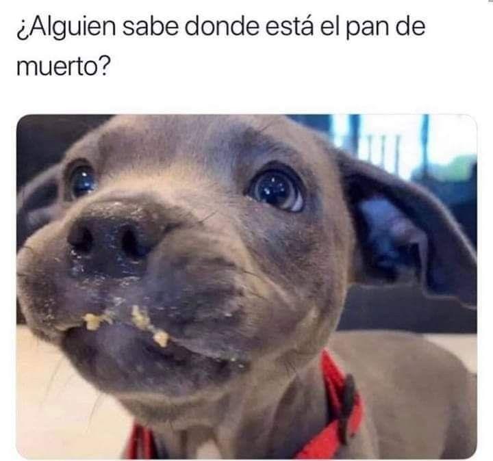 Pin De Grecia Regina Gonzalez Espadas En Firulais Funny Memes Divertidos Humor De Perros Memes Perros