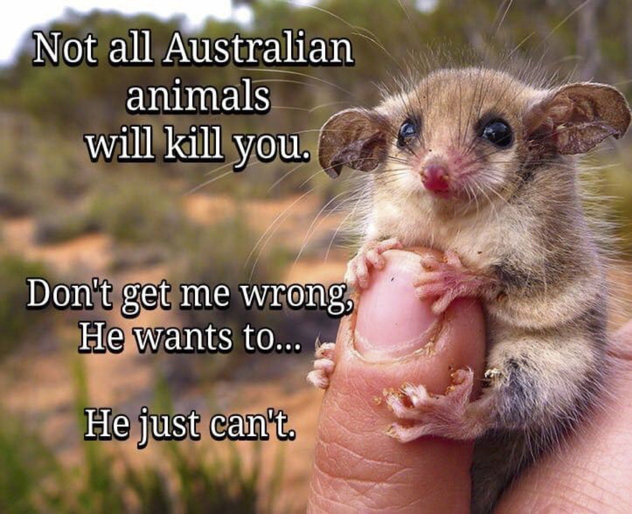 ConservationBytes on Funny pictures, Australia funny, Humor