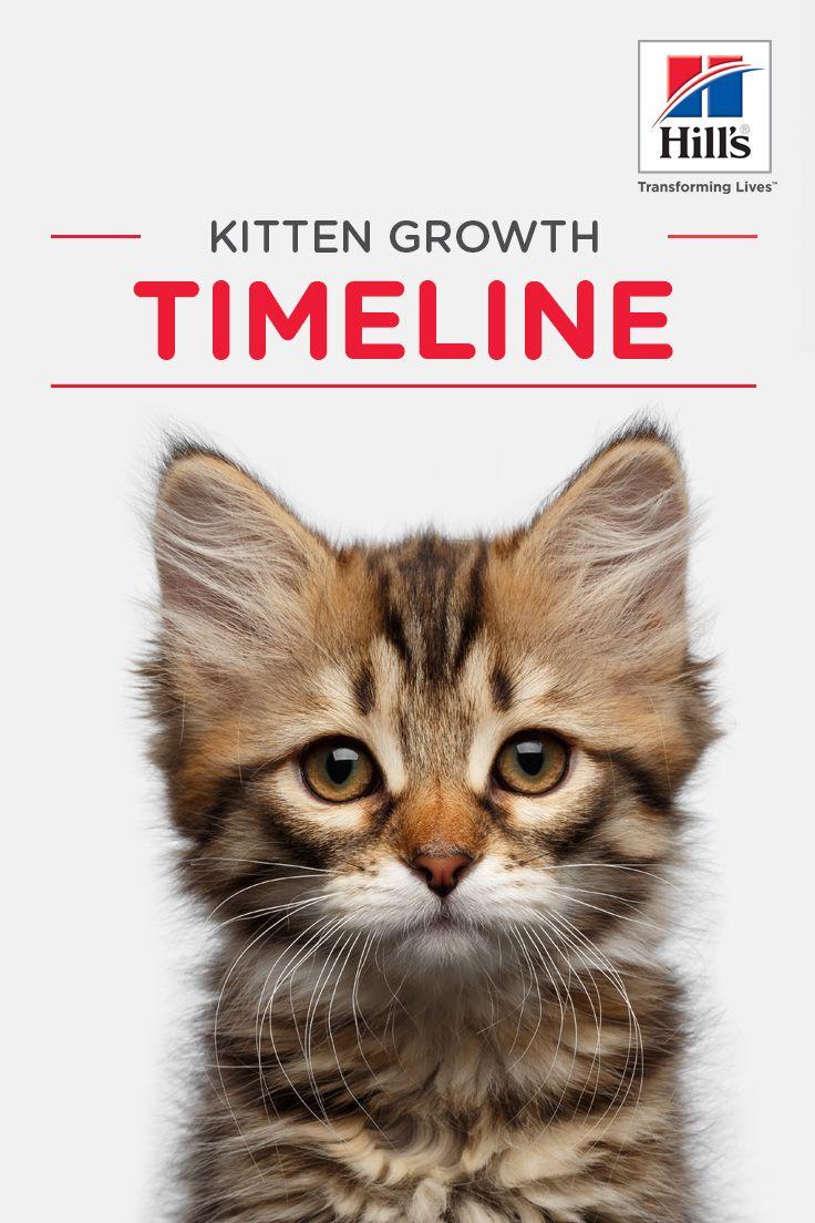 Weekly Kitten Development Timeline Hill S Pet Kitten Growth Chart Cat Parenting Kitten Care