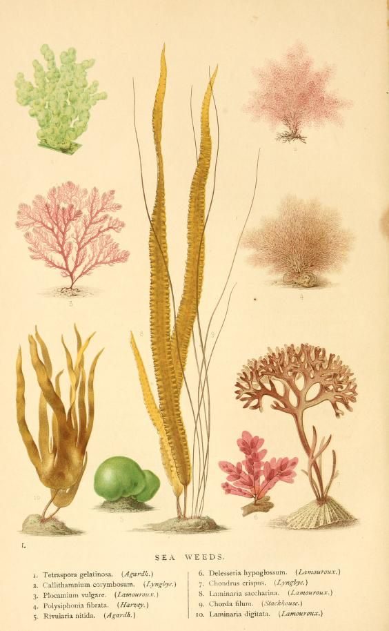 The world of the sea. - Biodiversity Heritage Library ...