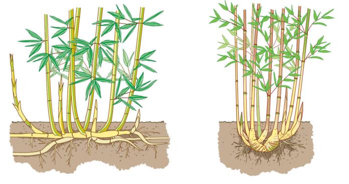 Bambus Garten Garten Bambus Und Bambus Garten