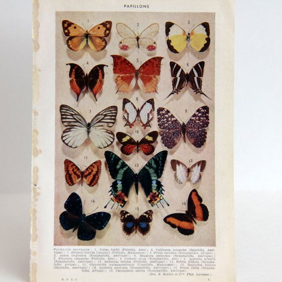 Butterflies - Vintage Book Page