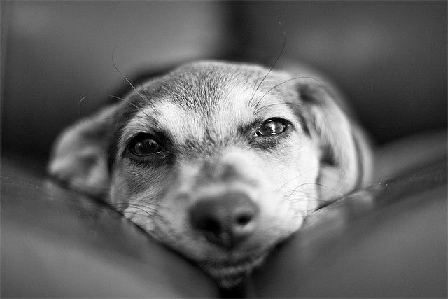 face to face by Victor Bezrukov, via Flickr