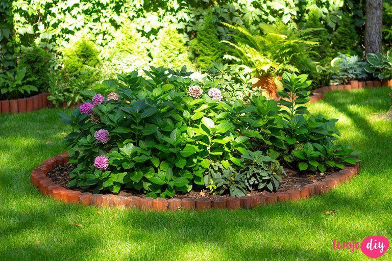 19 Roslin Ktore Beda Rosly W Zacienionych Miejscach Twoje Diy Plants Garden Pergola
