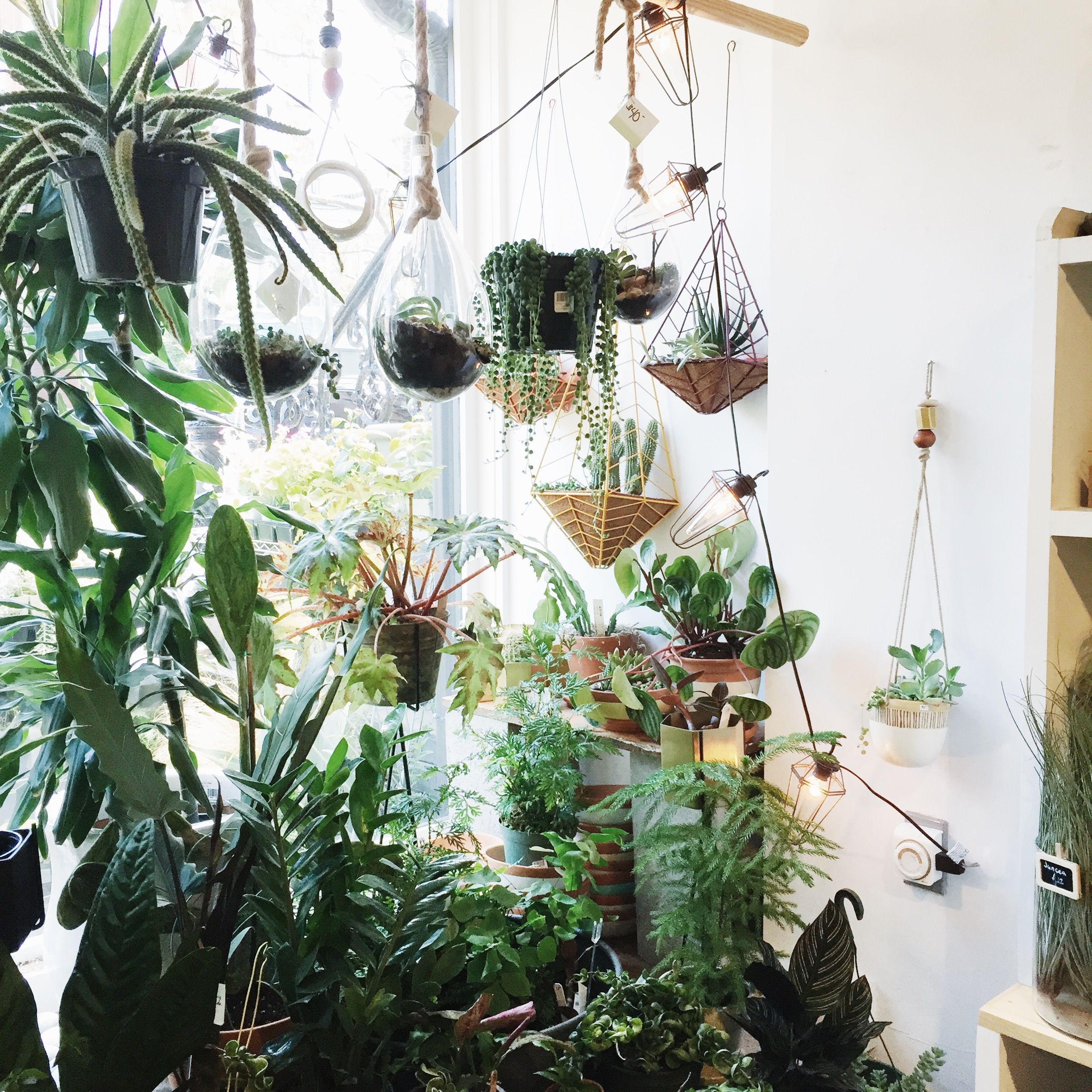 Living The Plant Lover S Dream Window Plants Plants Plant Lover