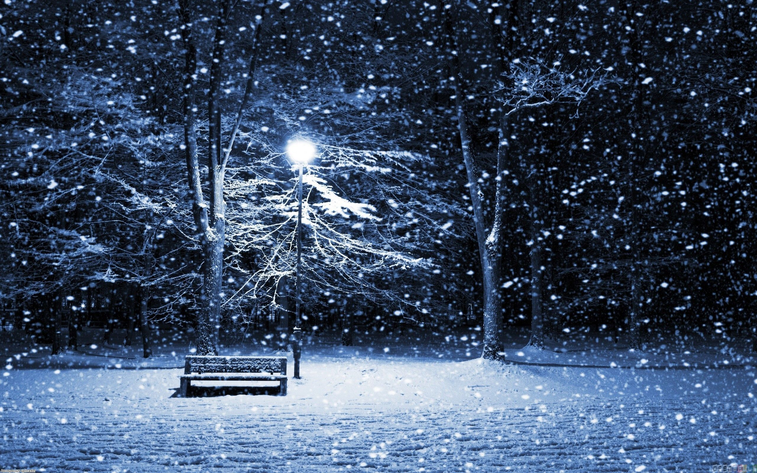 Night Snow Over The Park Beautiful Nature Landscapes