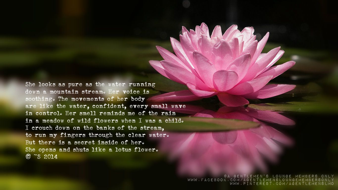 She looks as pure as the water running down a mountain stream her explore lotus flowers pink lotus and more izmirmasajfo