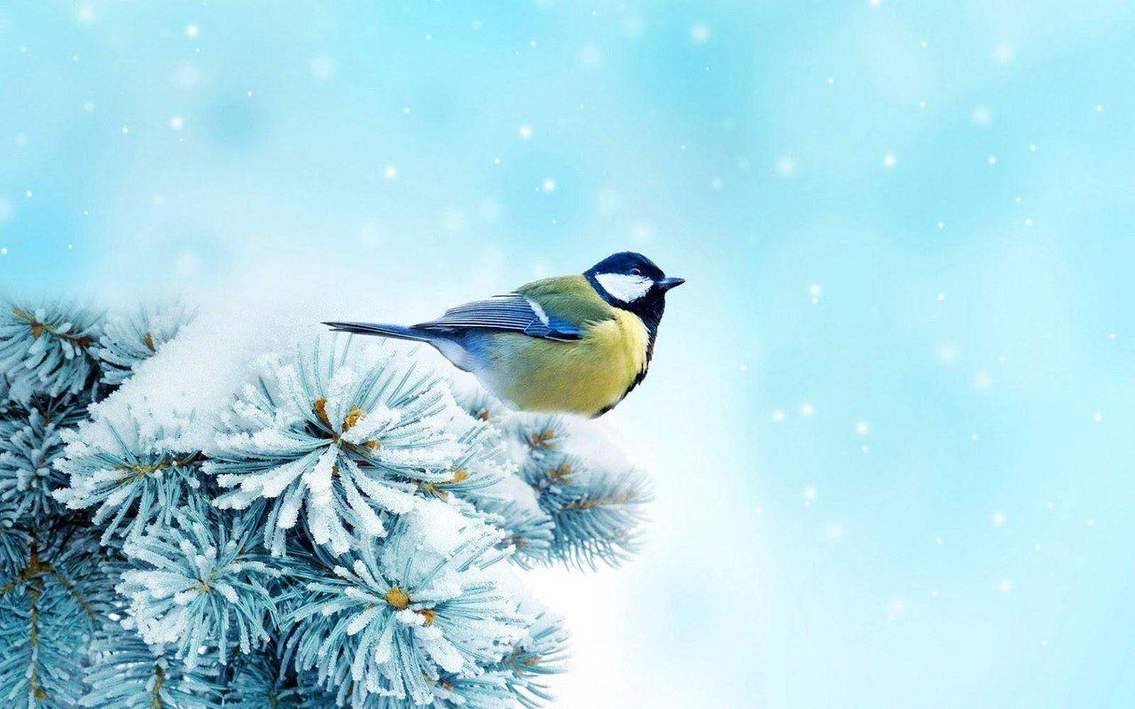 J0ry6CzwLK4.jpg (1280×800) | Обои с птицами, Птицы