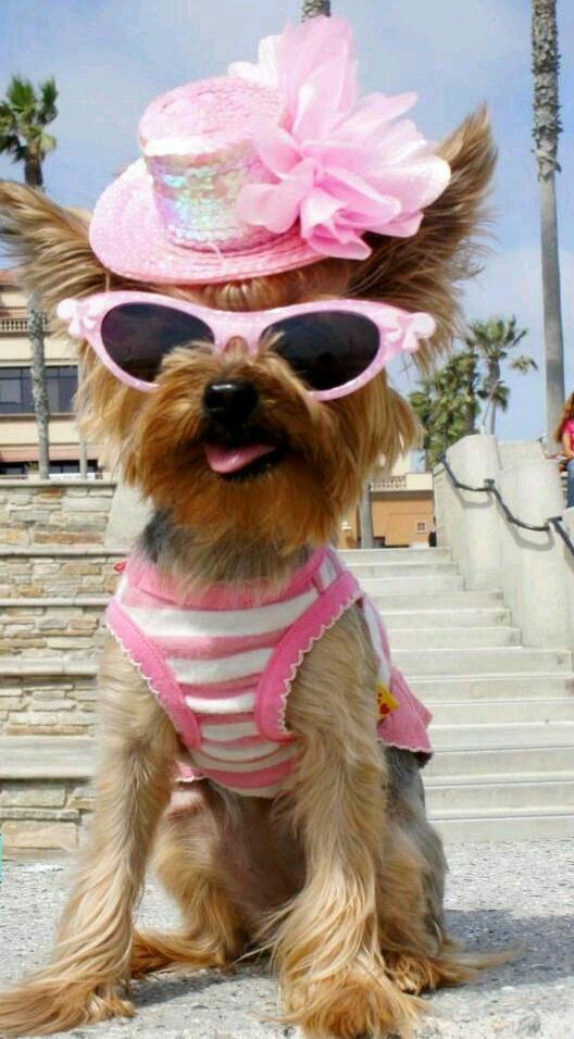 Cute dog in pink