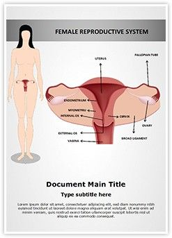 Female Reproductive System Ms Word Template Is One Of The Best Ms