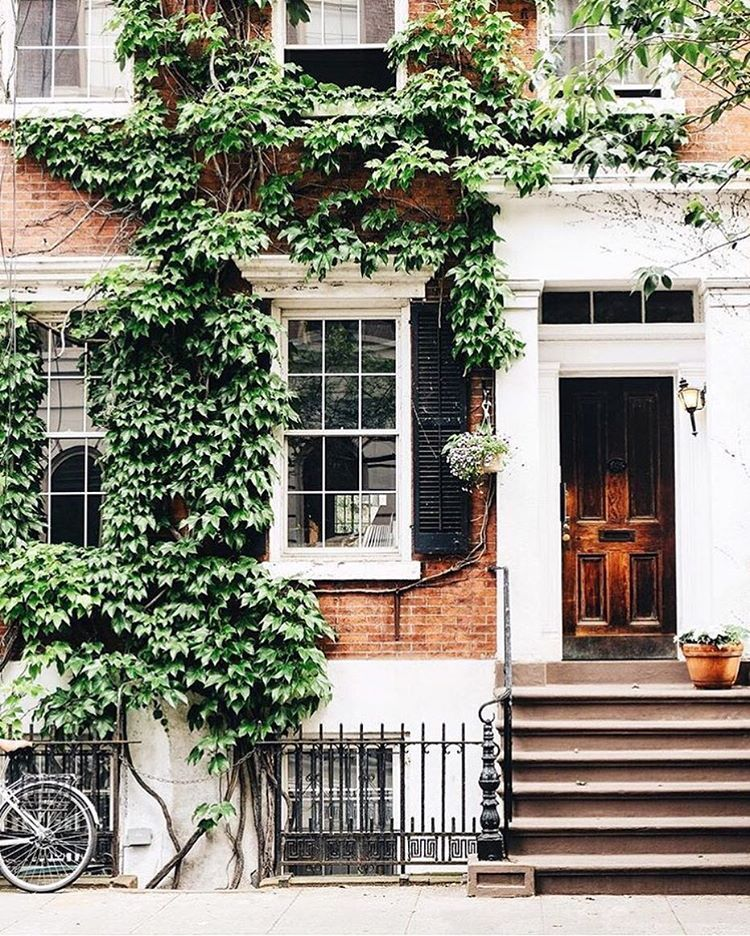 Ivy Covered Brick Home Exterior With White Window Trim And