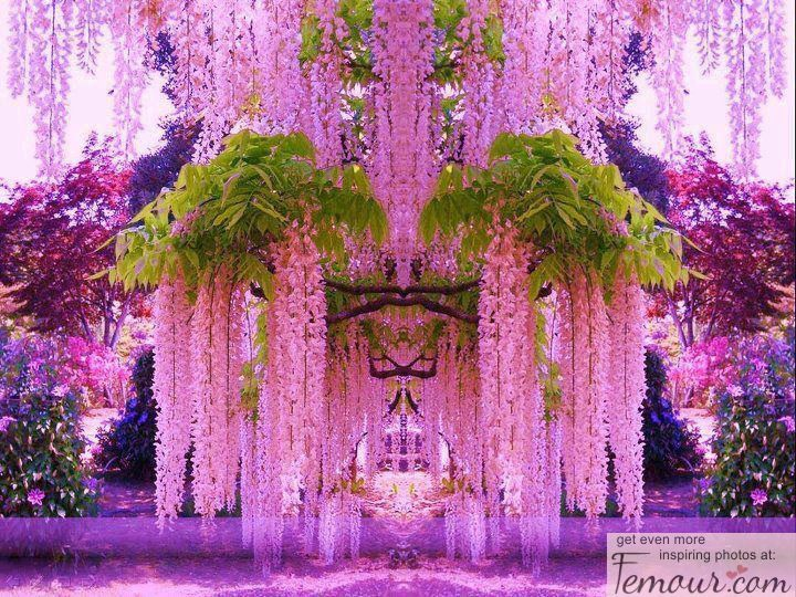 Weeping willow tree for the love of purple pinterest flowers weeping willow tree mightylinksfo
