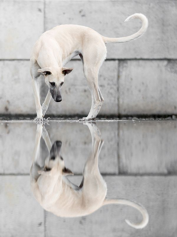 Wieselblitz photography***Harbor Reflections