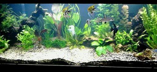 Aquarium Plant Paradise Takashi Amano Pdf