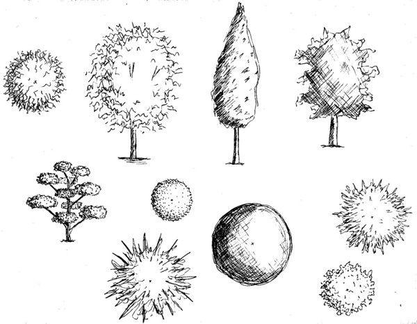 Coupes et plans arbres sketches gardens dessin arbre plan masse et dessin - Arbres dessins ...