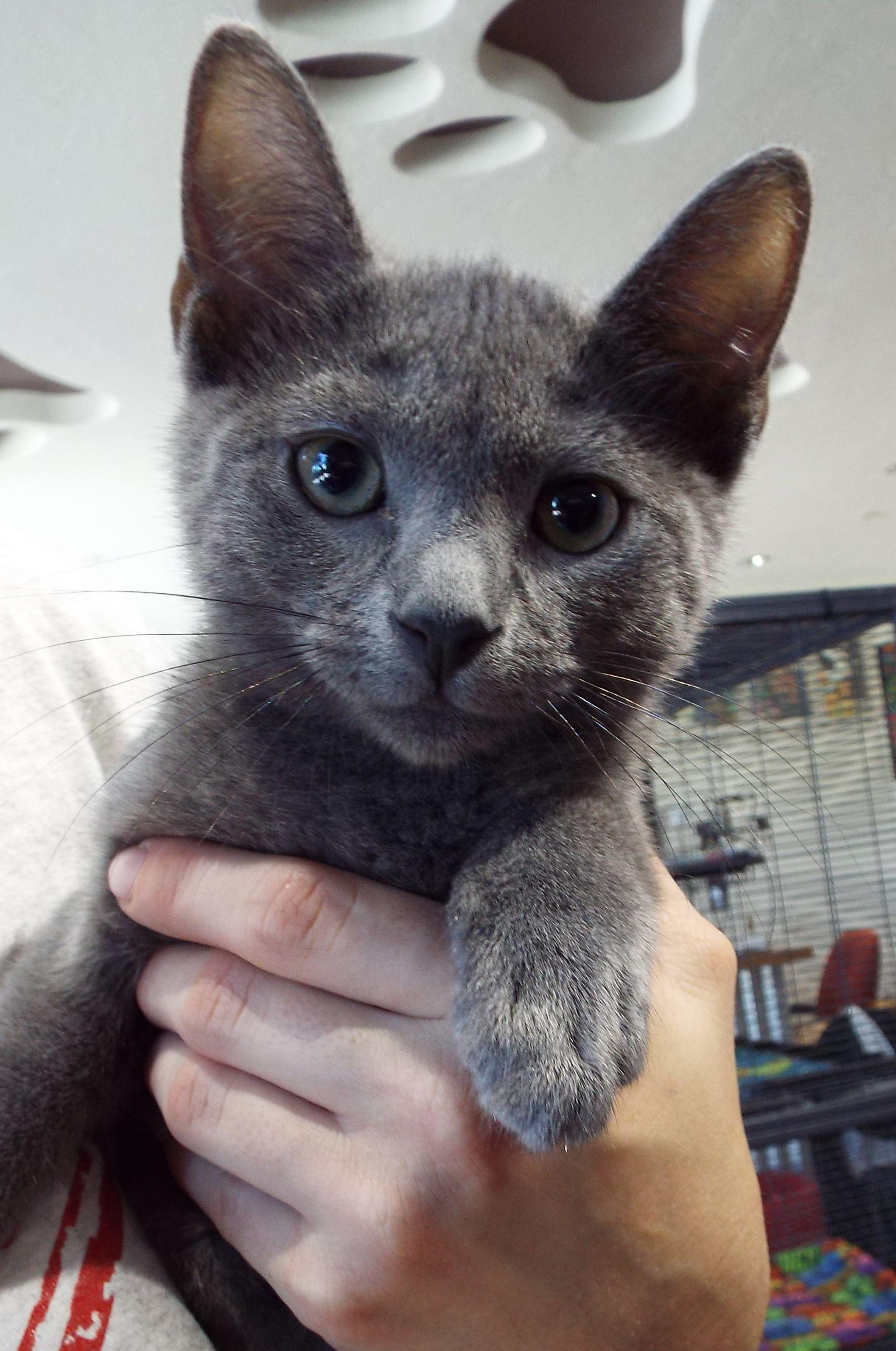 Hi There I M Kitten Cute Cats Kittens Cutest Cats Kittens