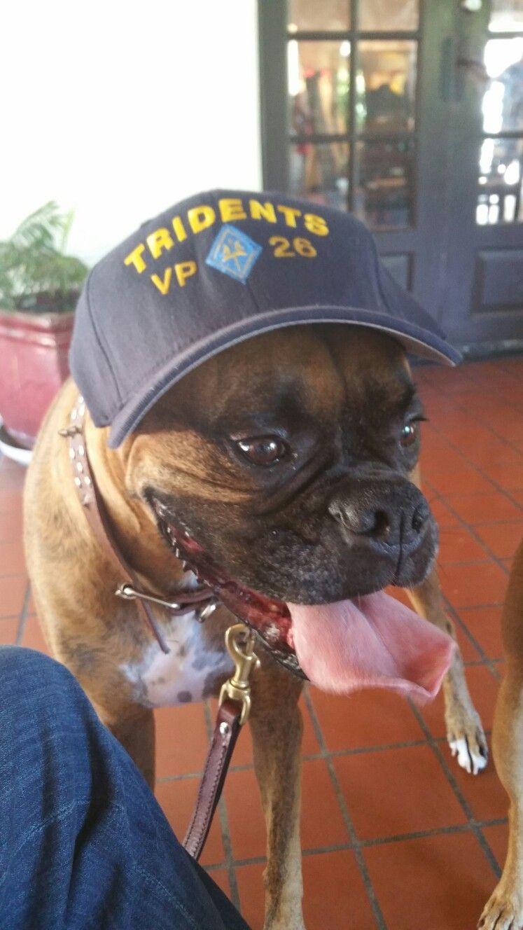 Pin By Sit Happens Jacksonville On Sit Happens Jax Dog Training