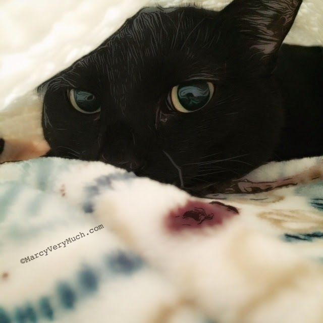 Marcy Very Much: mostly me, by penelope: saint paddy's day scare http://marcyverymuch.blogspot.com/2015/03/mostly-me-by-penelope-saint-paddys-day.html #SaintPatricksDay #BlackCat #cat
