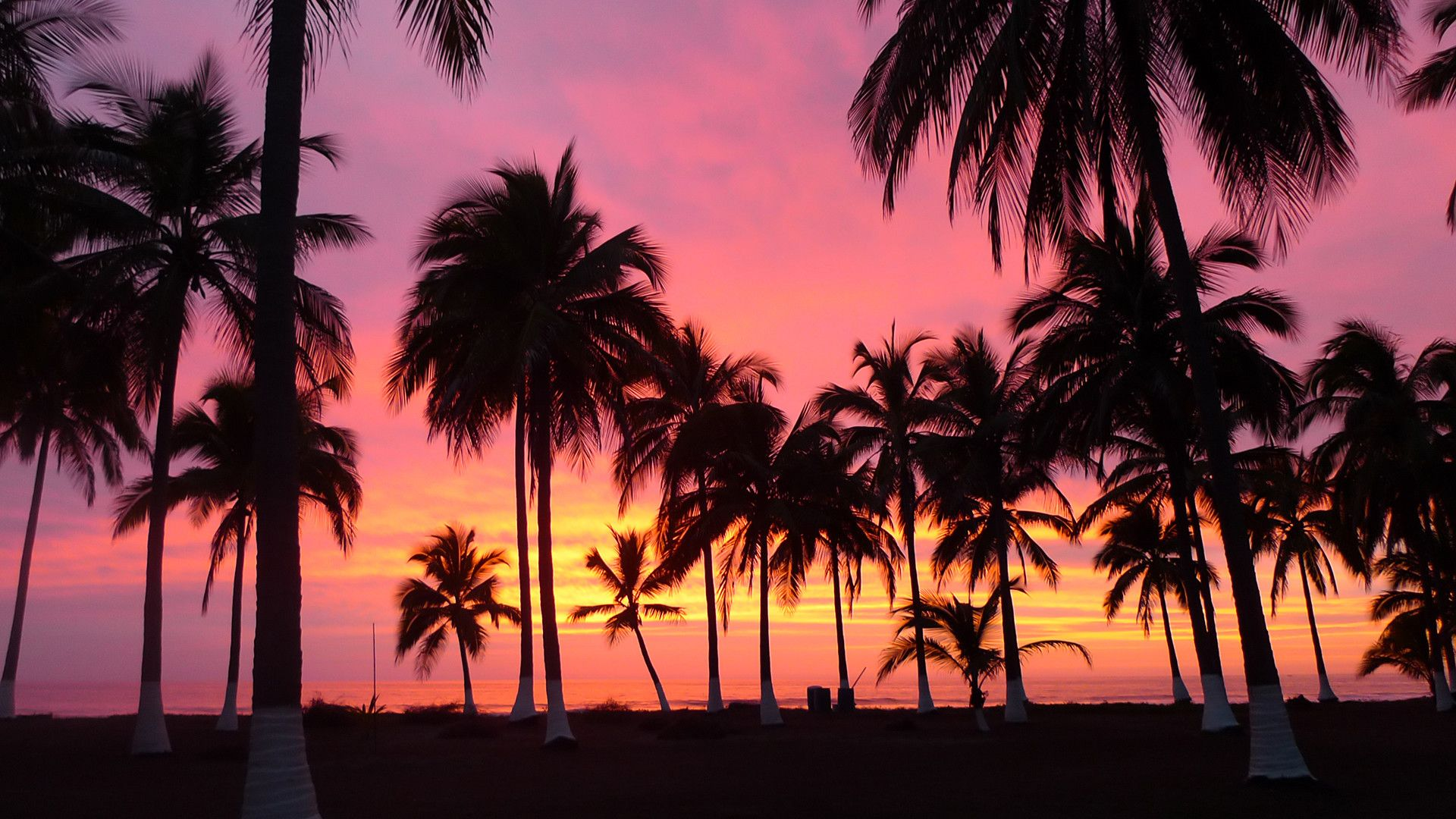1920x1080 High Quality Palm Trees Wallpapers Susie Guajardo Tree Sunset Wallpaper Palm Trees Wallpaper Sunset Wallpaper
