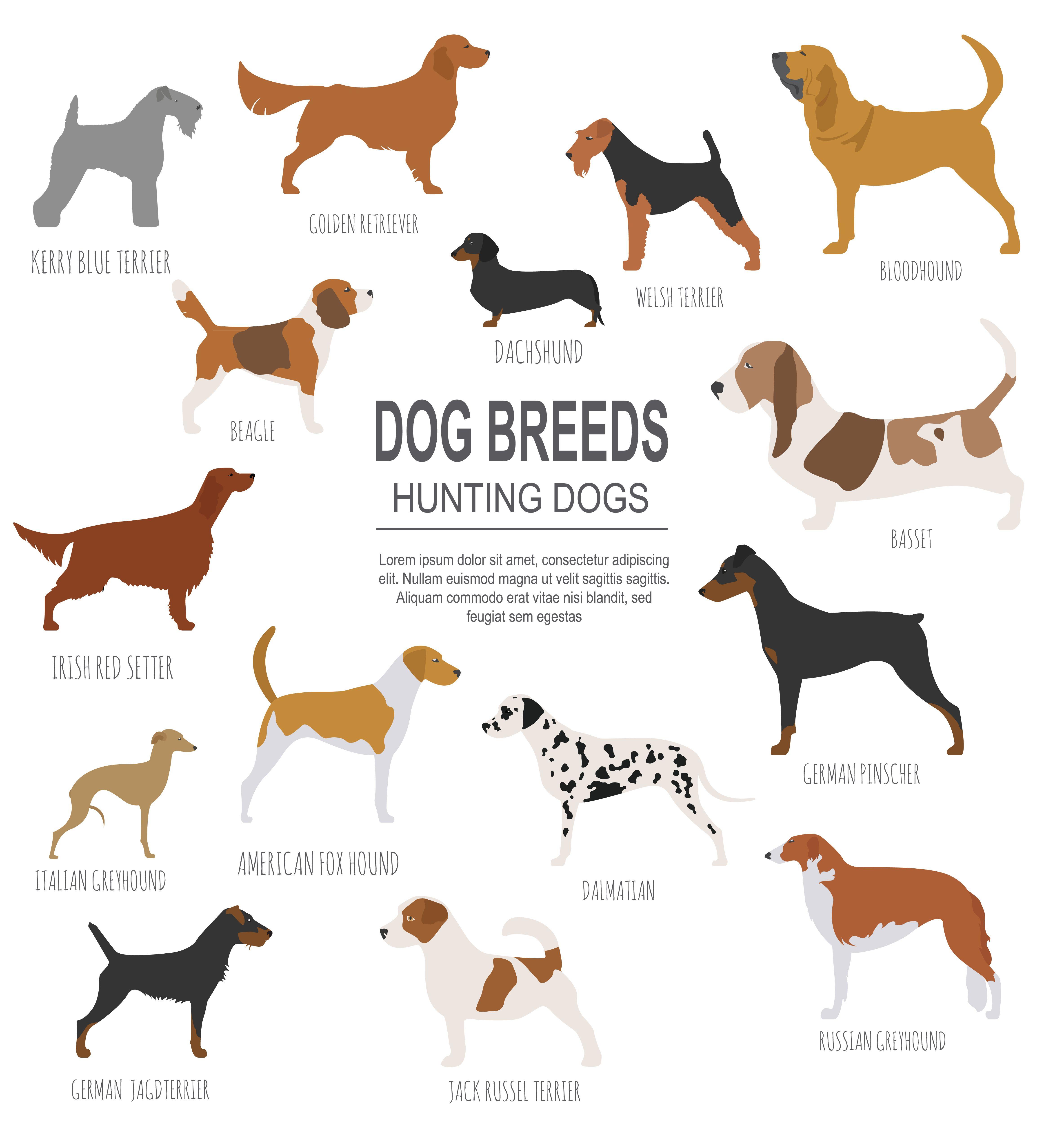 Dog Breeds Hunting Dog Set Icon Flat Style Vector Illustration