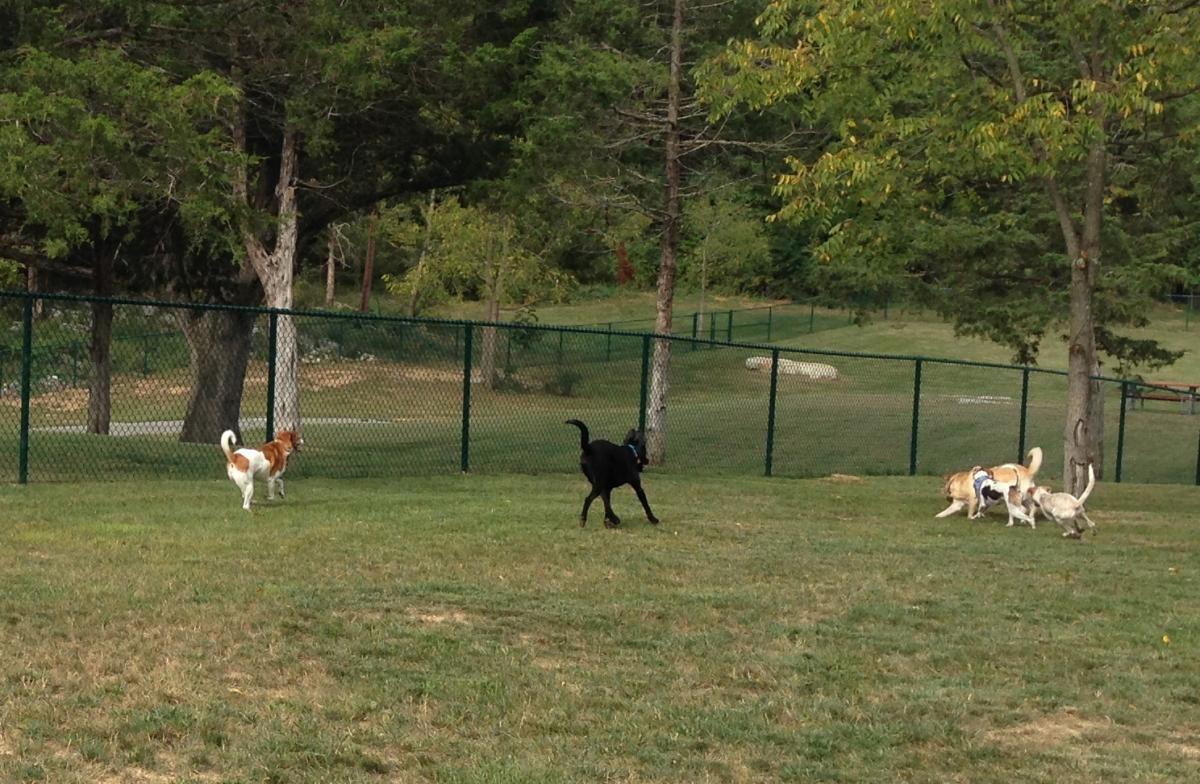 Smithland Road Dog Park Dog Park Park Dogs