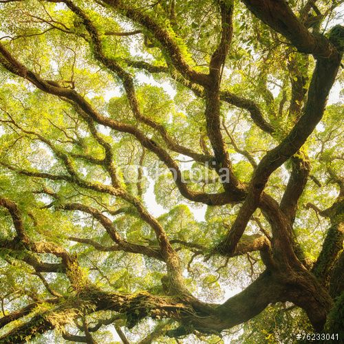 "Download the royalty-free photo ""Ancient banyan canopy"" created by freebreath at the lowest price on Fotolia.com. Browse our cheap image bank online to find the perfect stock photo for your marketing projects!"