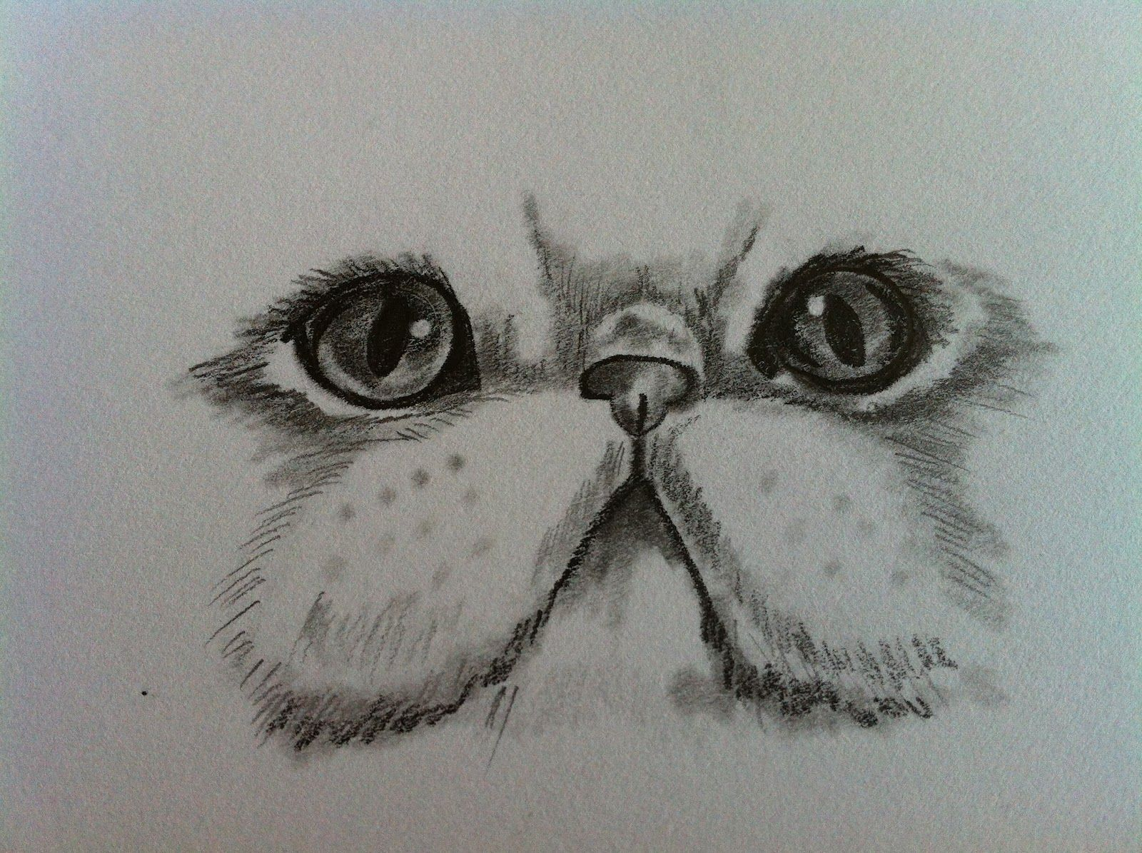 Persian cat draw google zoeken persiancatdrawing