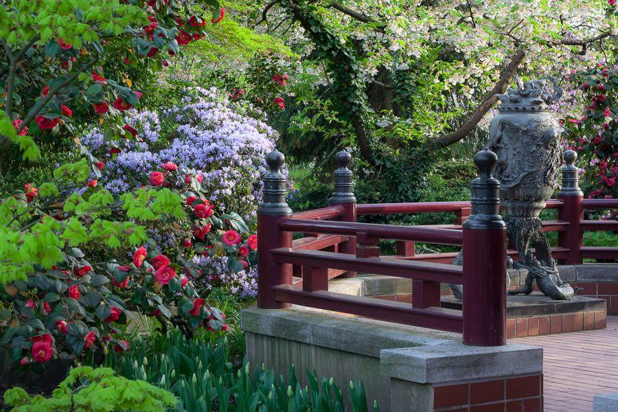 Image Result For Cologne Japanischer Garten Leverkusen Garden Bridge Outdoor Outdoor Structures