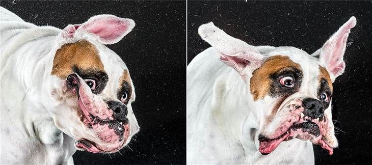 Shake It Adorable Photos Catch Dogs In Motion Dogs Dog Shaking