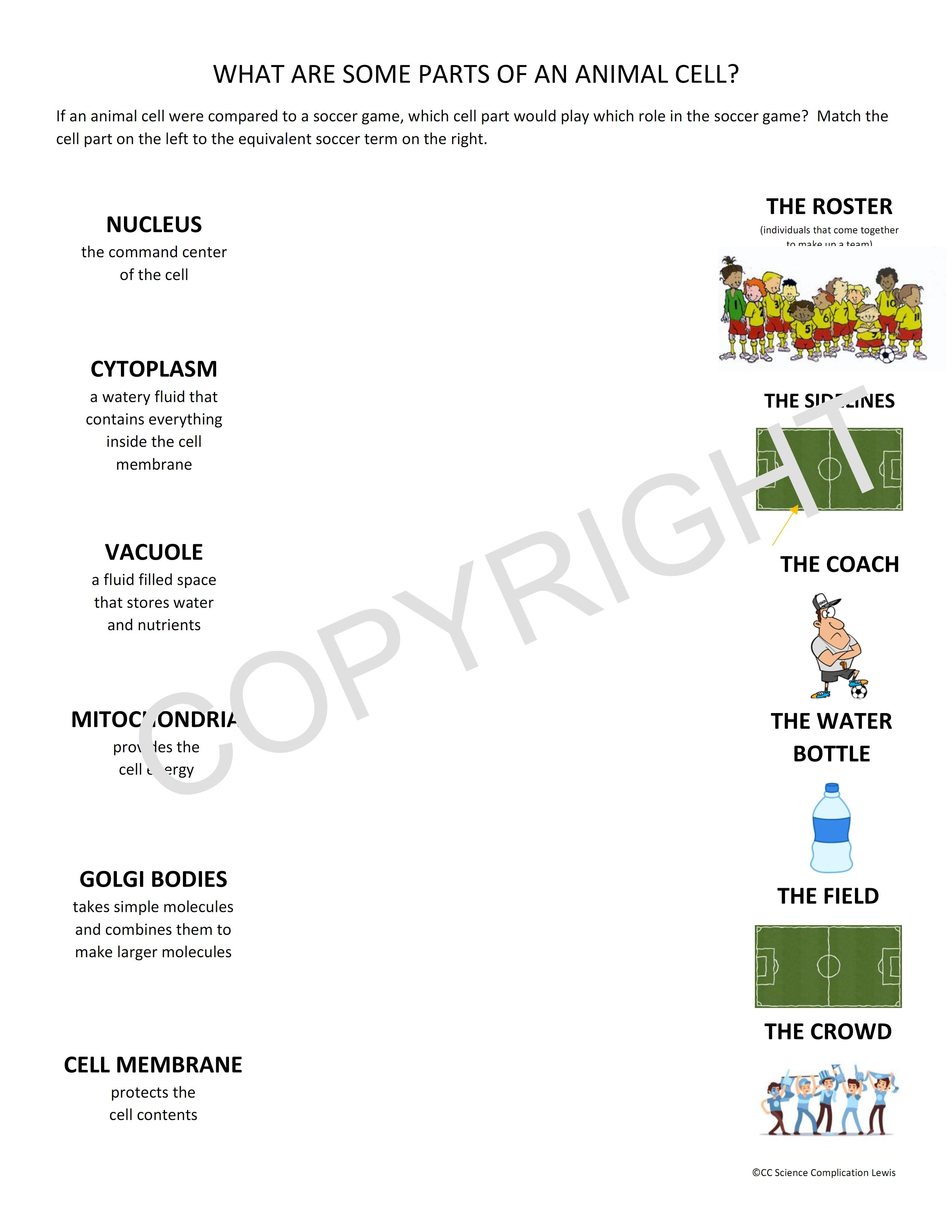 Parts Of An Animal Cell Worksheet One Worksheet From A
