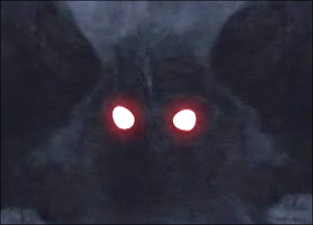 From approximately November 1966 through December 1967, dozens of people reported sightings of a huge, semi-human winged creature with glowing red eyes in and around Point Pleasant, West Virginia. At between 6.5 and 7 feet tall and with a wingspan of nearly 10 feet, the shadowy creature was reportedly able to fly great distances at speeds up to 100 miles per hour. All who encountered this menacing creature were terrified by their experience. The Mothman