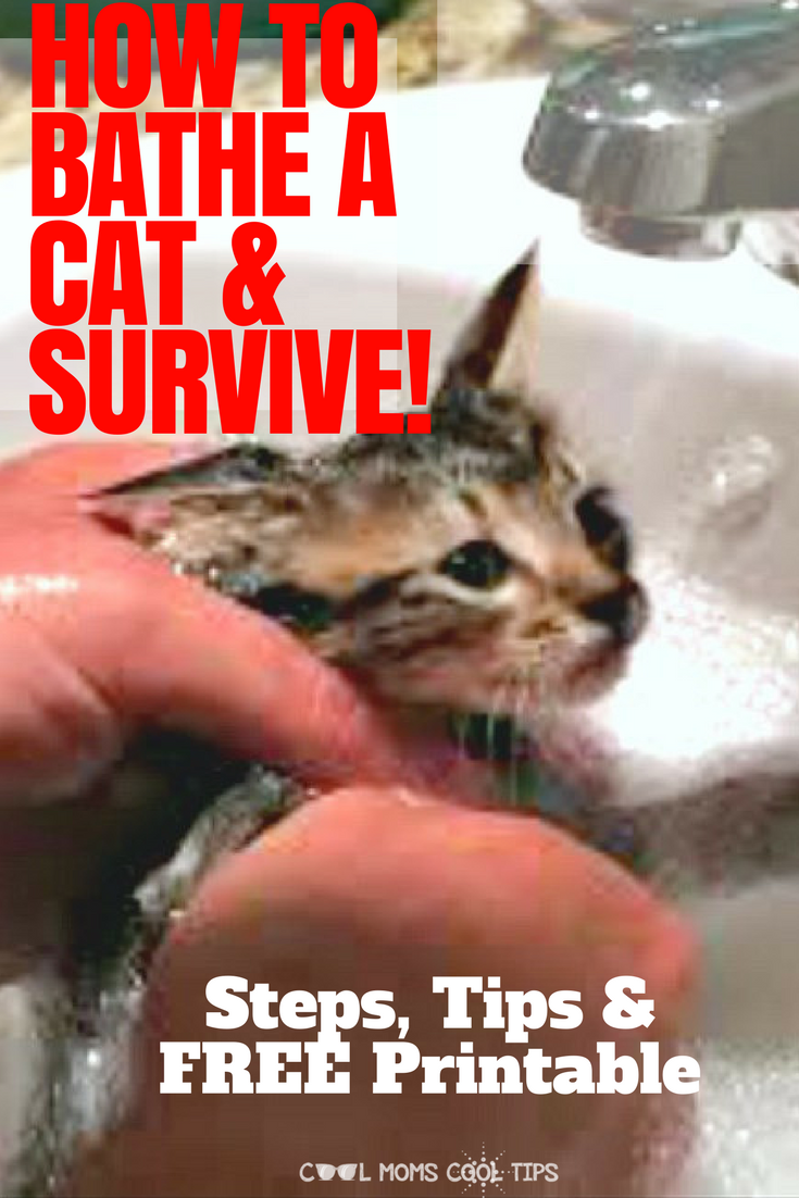 How To Bathe A Cat And Survive Process And Supply List Printable Cats Best Mom Cat Bath