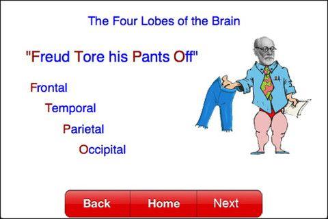 Four Lobes Of The Brain | Nursing mnemonics, Nursing ...