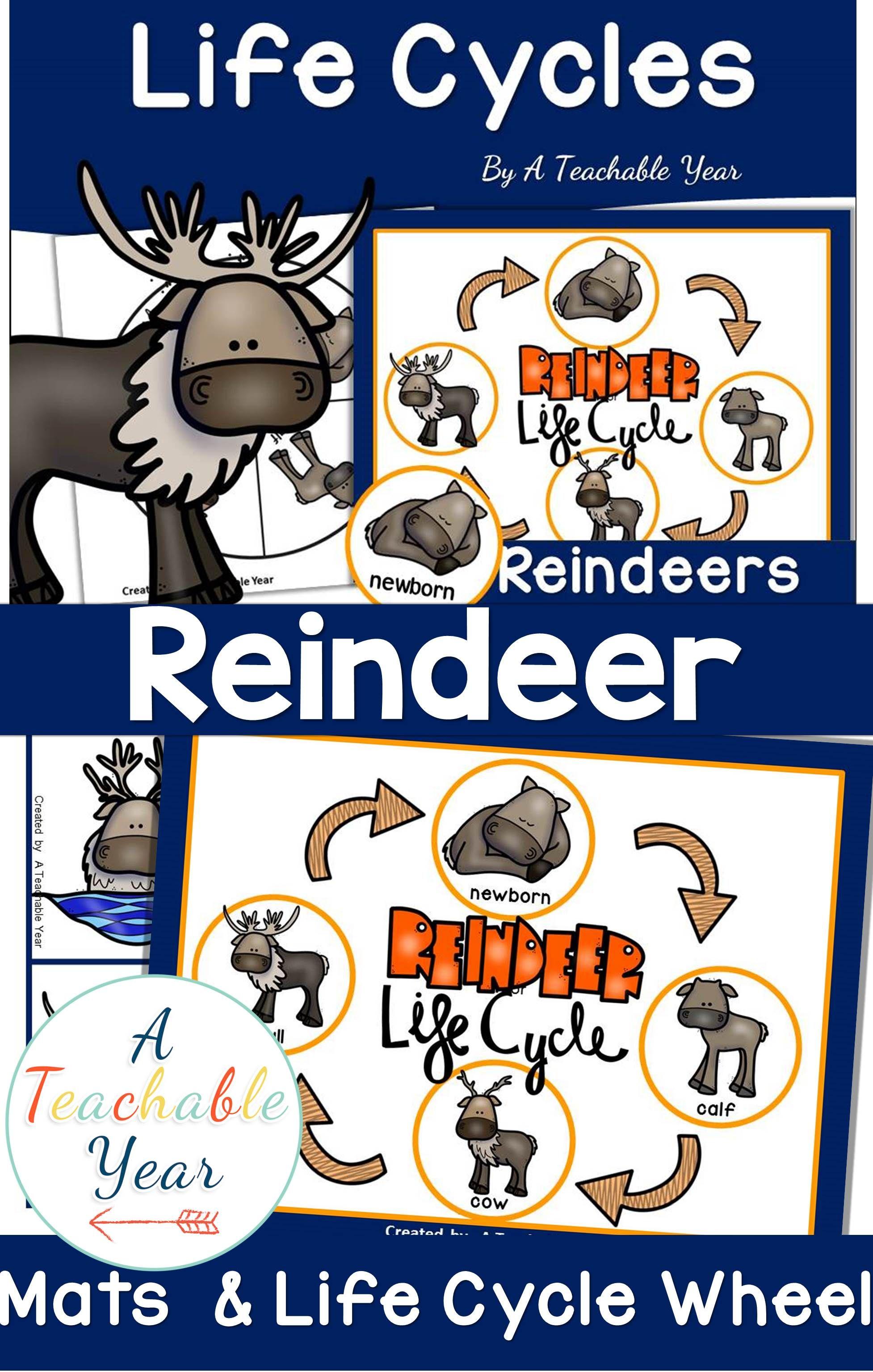 Reindeer Life Cycle Activities