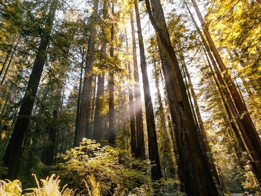 redwood wedding venues sonoma county