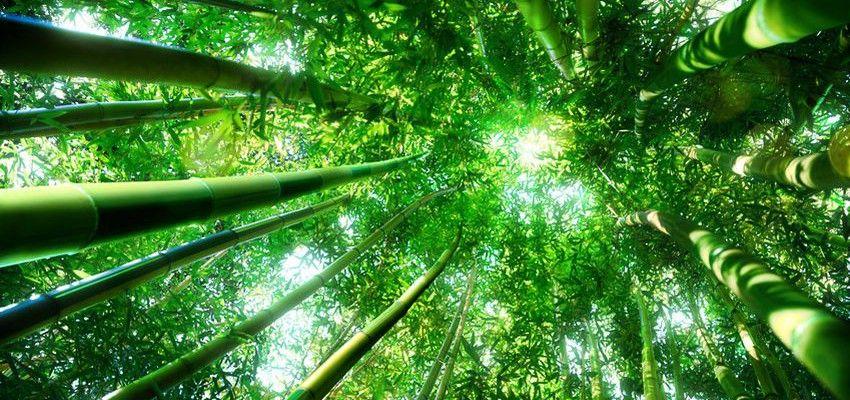 Bambusparkett 10 Gute Grunde Sprechen Dafur Wandbild Wand Tapeten Wandtapete