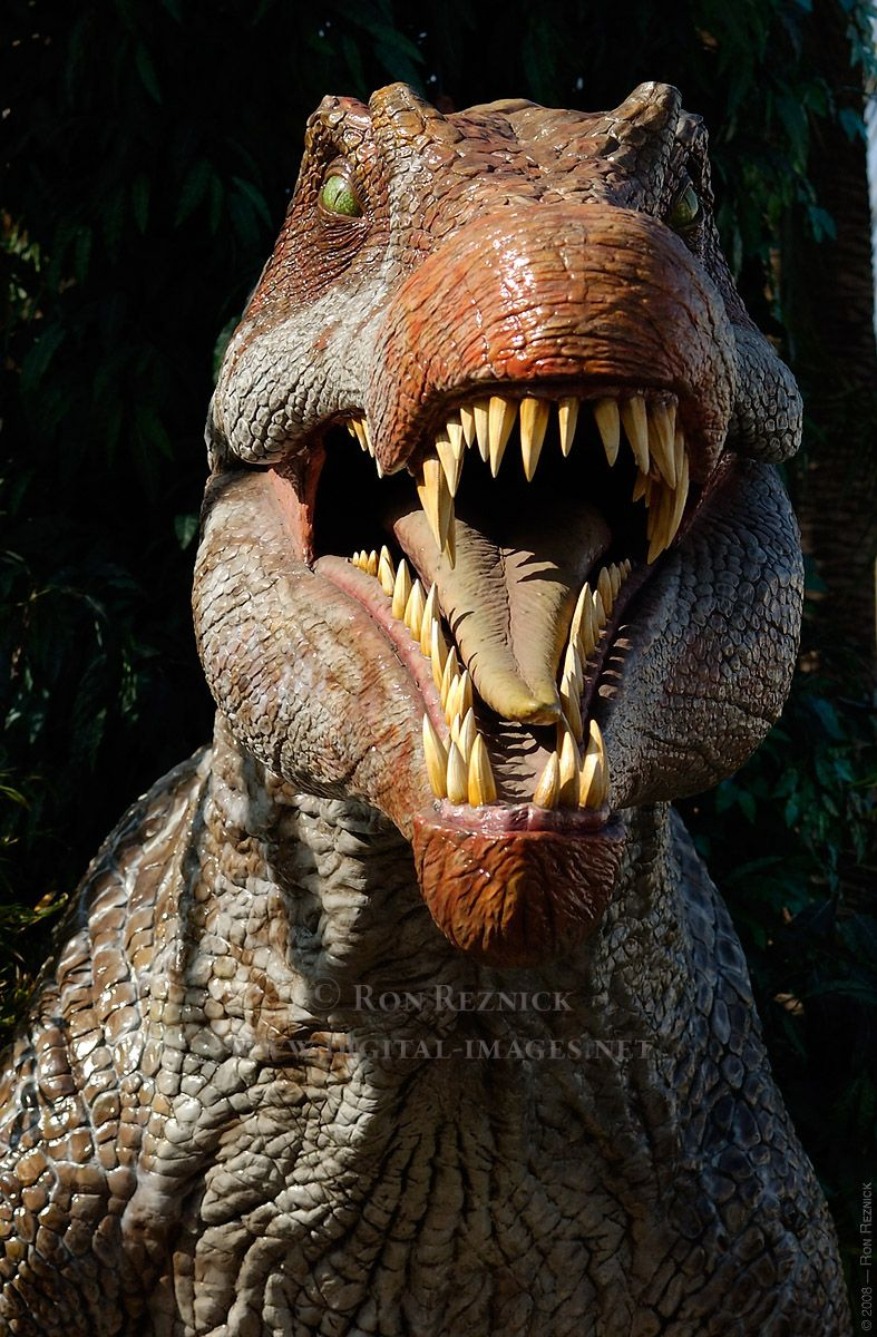 Spinosaurus Spinosaurus, Dinosaur, Dinosaur pictures