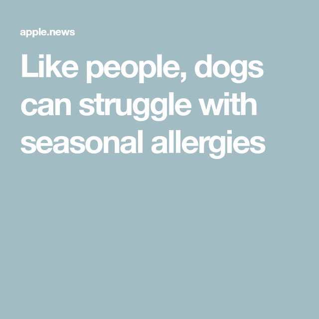 Like People, Dogs Can Struggle With Seasonal Allergies