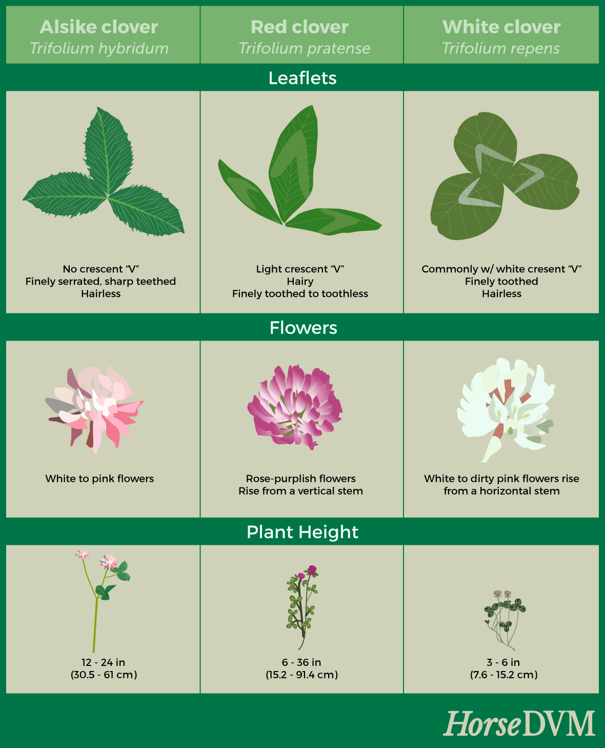 Clover Species Comparison With Images