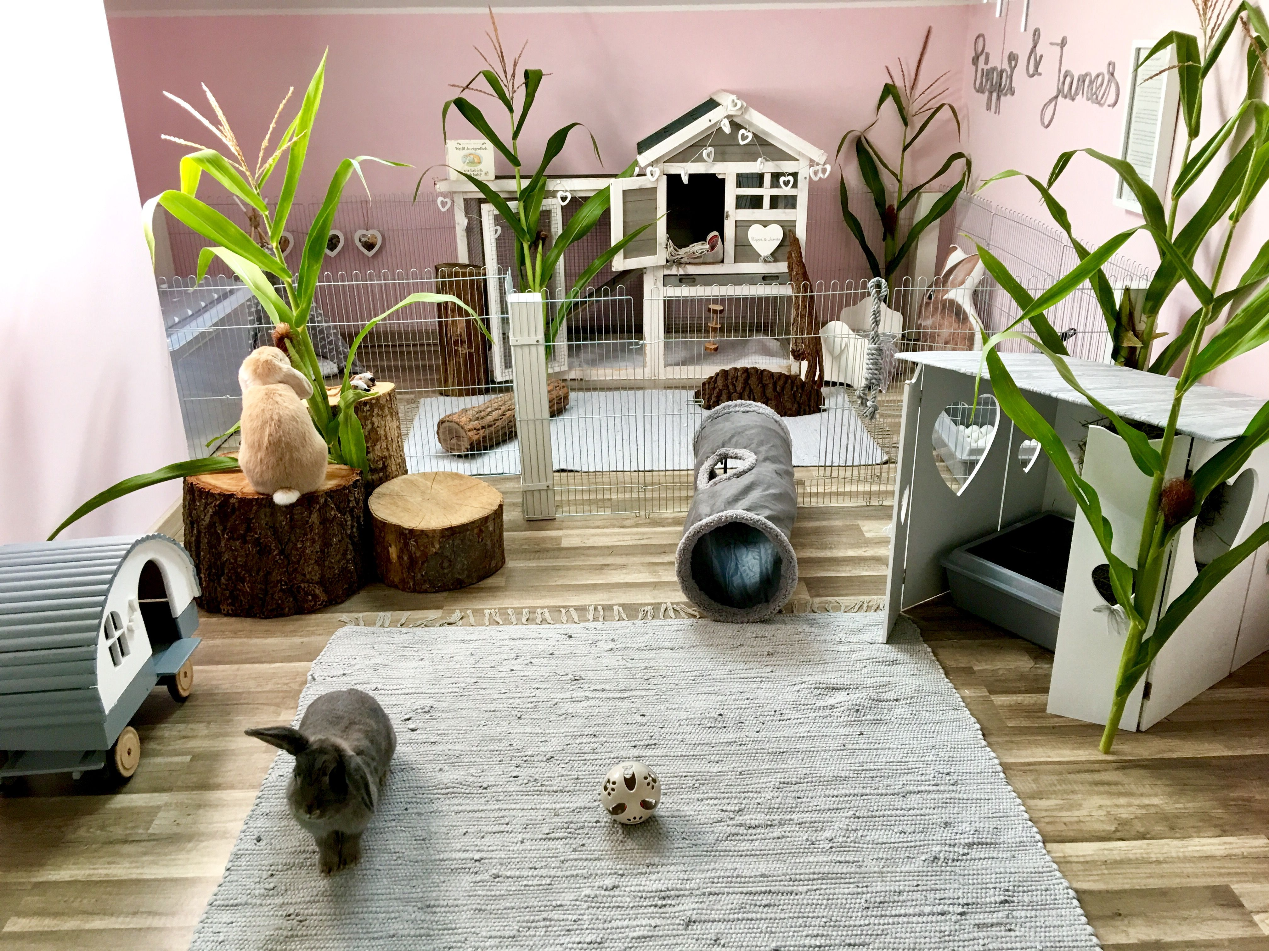 Pin by noah Bowman on Animal Cage Ideas Bunny room