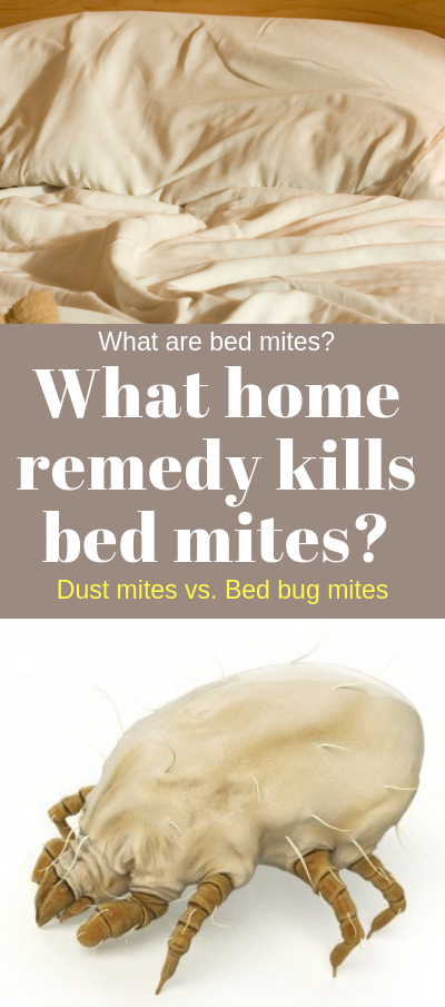 How To Remove Dust Mites From A Mattress Naturally 20 Home Cleaning Tips For Bed