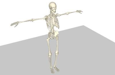 Skeleton Ragdoll - Sketchyphysics July7/2007 - 3D Warehouse